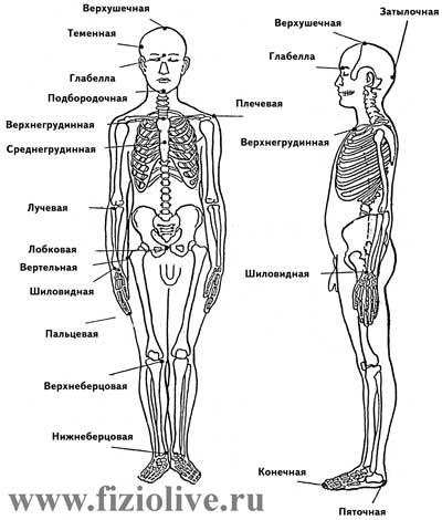 Anthropometric points