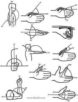 Volume of movements in joints of the upper extremities
