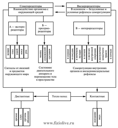 Classification of receptors