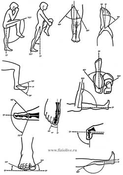 Range of motion in the joints of the lower extremities