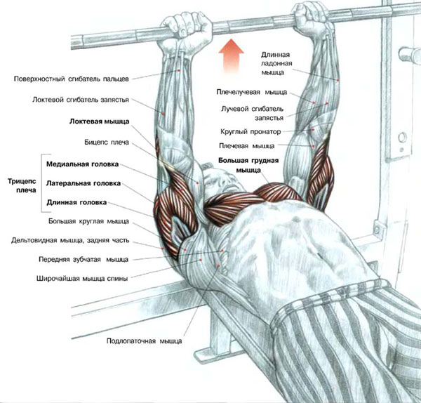 Bench press narrow grip