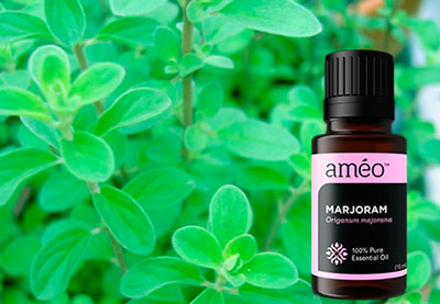 It is also not recommended to use marjoram oil for a long time