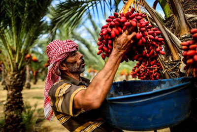 Is palm oil harm and health benefits