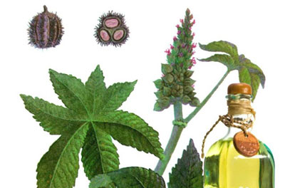 Castor oil - properties and uses